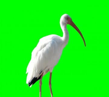 crane-613448_1280